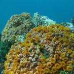 Flotte koraller og klart vann